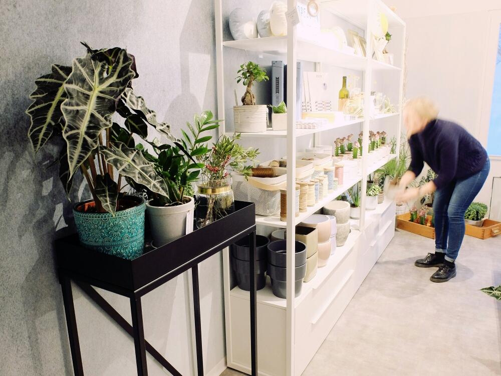 Die RoomGardens Pflanzentische in ausgewählten Geschäften (z.B. Lebensfreude-Conceptstore in Zwickau)