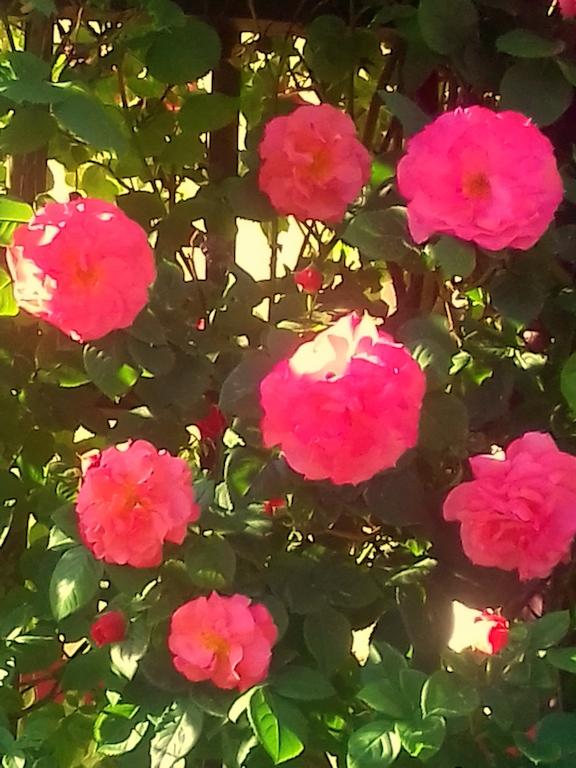 Kräuter, Blumen & Kraftplätze, Sonne, Wind & Wasser...