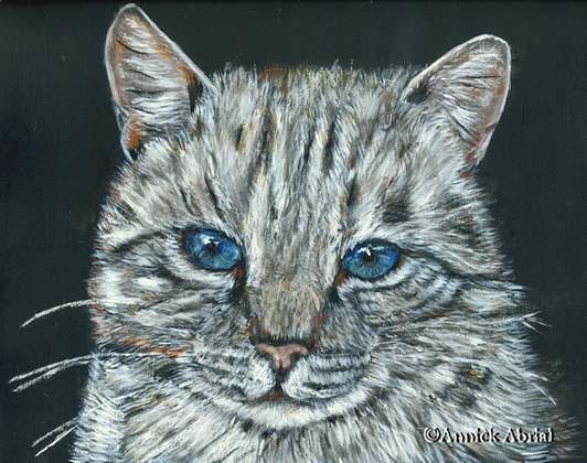 Rêve bleu - Pastel sec - Art animalier - 24 cm x 21 cm - 2012 - Disponible