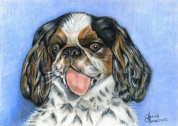 Portrait chien - Pastel et Crayon de couleur - Art animalier - 15 cm x 19 cm - 2012 - Collection privé