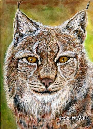 Le lynx - gouache et pastel - Art animalier - 24 cm x 32 cm - 2013 - Disponible
