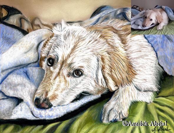 Portrait aux pastels chien Asuna format 24 x 30 cm
