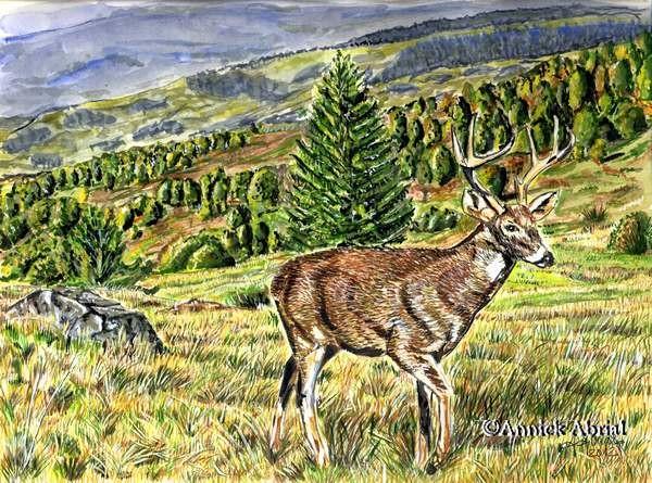 La clairière - gouache et aquarelle - Art animalier - 32  x 24 cm - Vendu