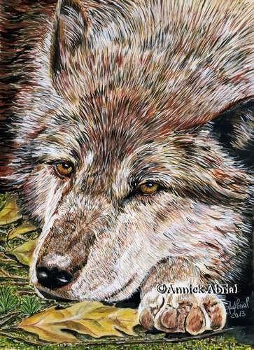Le repos du loup - Gouache - Art animalier - 24 cm x 32 cm - 2013 - Disponible
