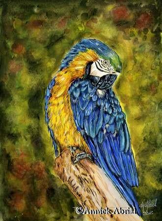 Ara bleu - Peinture à la gouache et pastel sec - Art animalier - 31 cm x 23 cm - Disponible