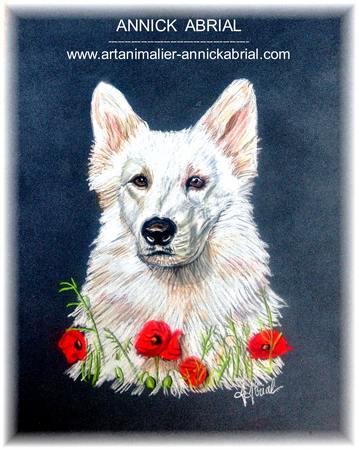 Portrait aux pastels de Ivoire berger blanc suisse