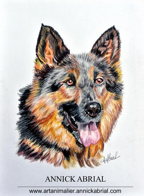 Portrait aux pastels secs sur commande d'un berger allemand