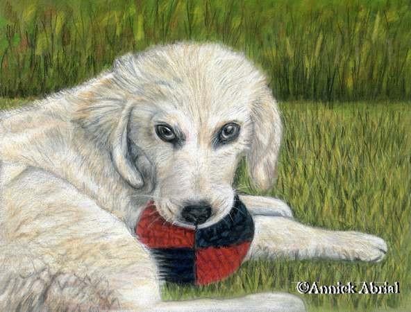 Portrait chien - Gospel - Pastel et Crayon de couleur - Art animalier - 32 cm x 24 cm - 2012 - Collection privé
