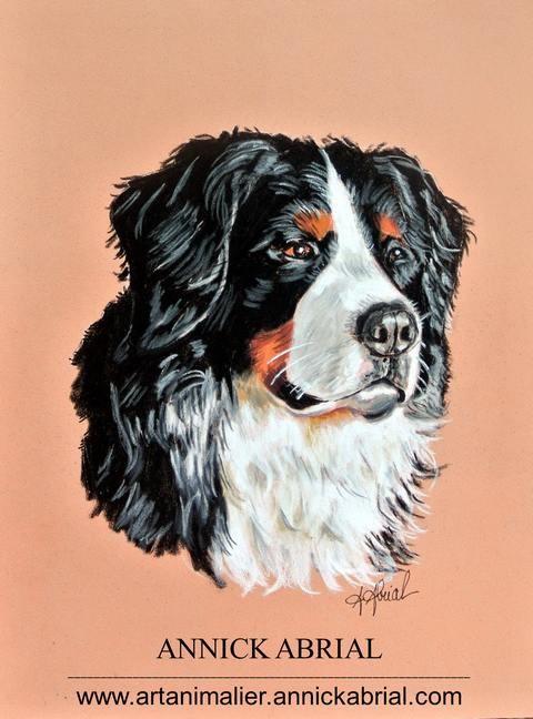 Portrait sur commande aux pastels d'un chien bouvier bernois