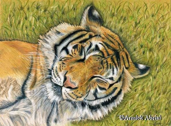 Le tigre - pastel secs
