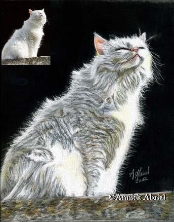 Portrait aux pastel chat blanc format 30 x 24 cm