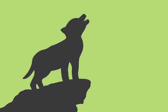 Valerie Forster, Buchvorstellung, Der kleine GROSSE Wolf