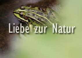 Valerie Forster, Button, Liebe zur Natur