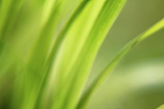 Valerie Forster, Buchvorstellung, Das Geheimnis der Gräser