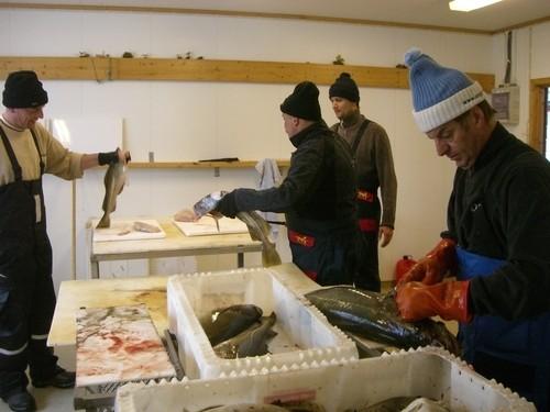 3h Angeln, top Ergebnis, jetzt müssen die Fische aber sauber gemacht werden