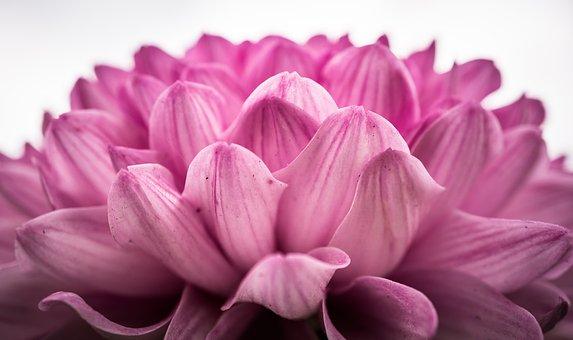 生花の美しさをそのままに