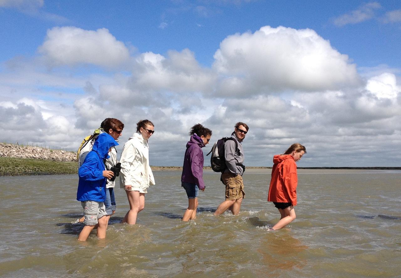 traversée baie de Somme guide sortie nature oiseaux plantes Crotoy Saint Valery sur Somme
