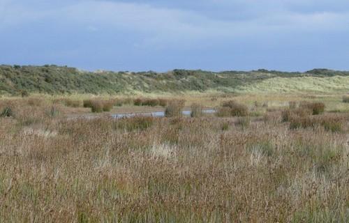 Baie de Somme, guide spécialiste, sortie nature, dunes, Crotoy, oiseaux, randonnée