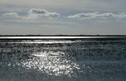 baie d'Authie, dunes, oiseaux, phoques veaux marins, phoques gris, coquillages, sortie nature, guide spécialiste