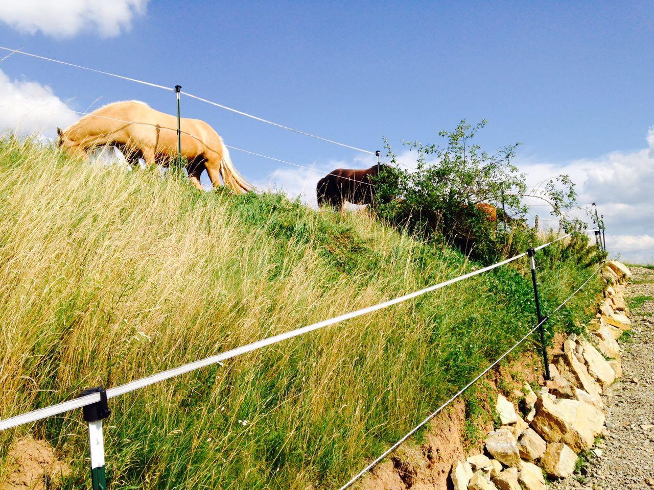 Zentrum für Pferdegesundheit - Paddocktrail: Steinwand