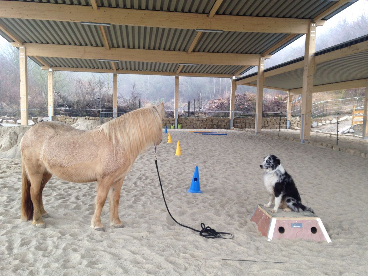 Zentrum für Pferdegesundheit: Reithalle