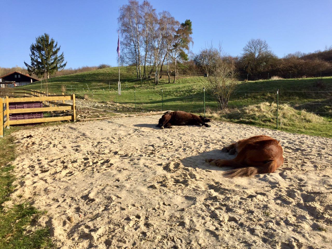 Zentrum für Pferdegesundheit - Paddocktrail: Liegebereich