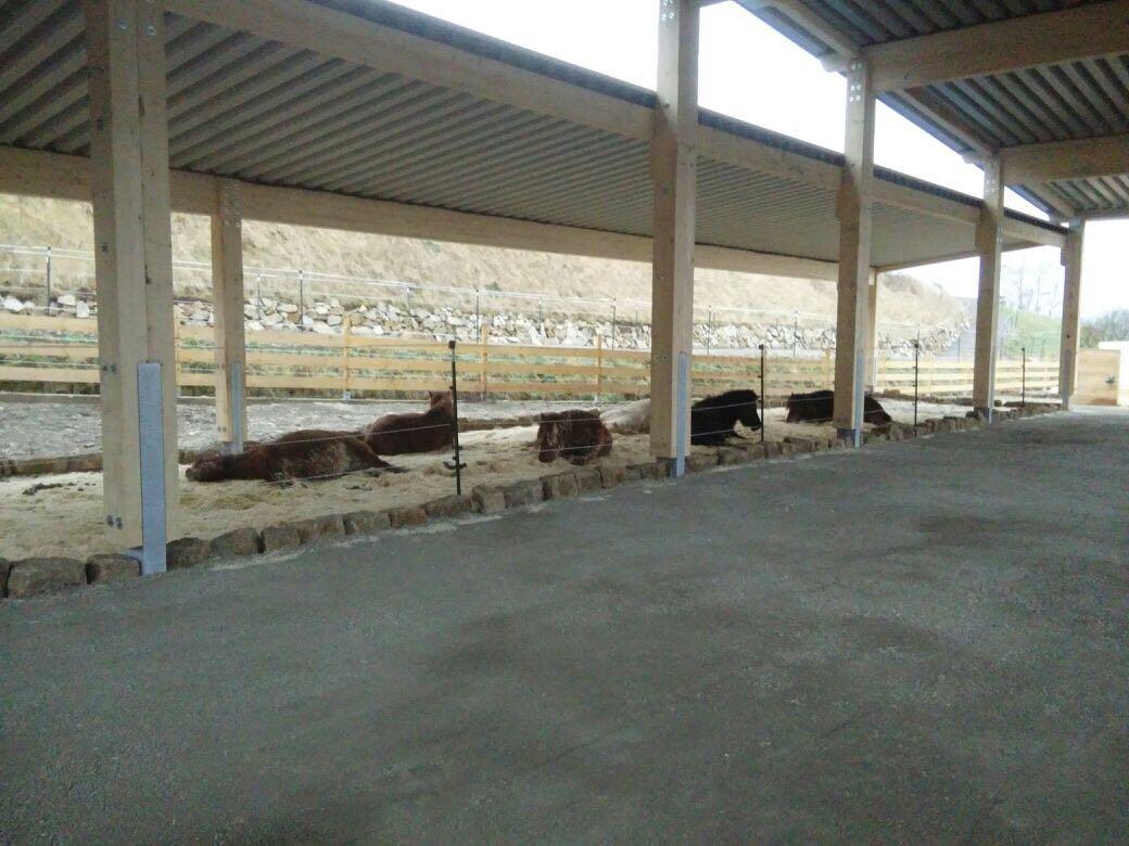 Zentrum für Pferdegesundheit: Offenstall mit Liegebereich