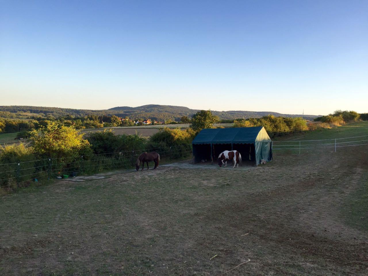 Zentrum für Pferdegesundheit: Winterweide