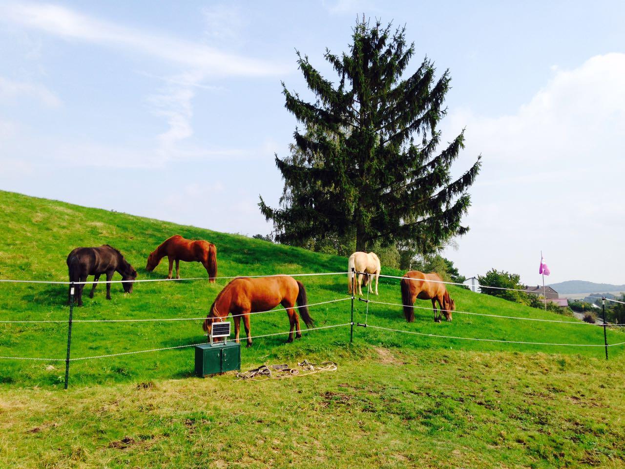 Zentrum für Pferdegesundheit: frisches Gras