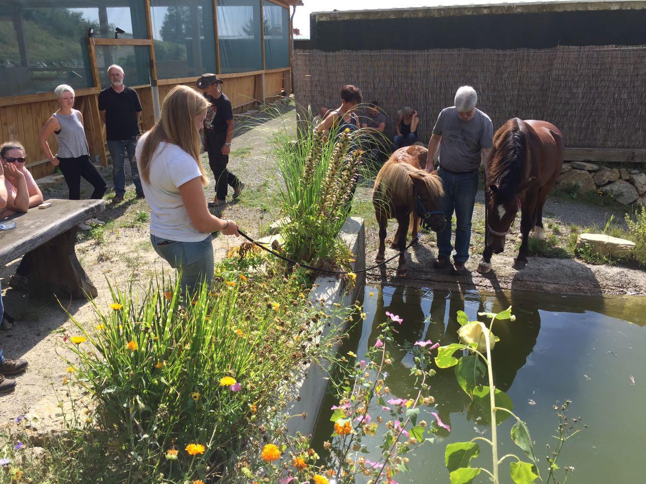 Zentrum für Pferdegesundheit: Pferdeplanschbecken