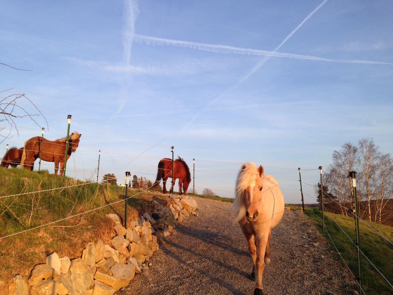 Zentrum für Pferdegesundheit - Paddocktrail: Abendsonne