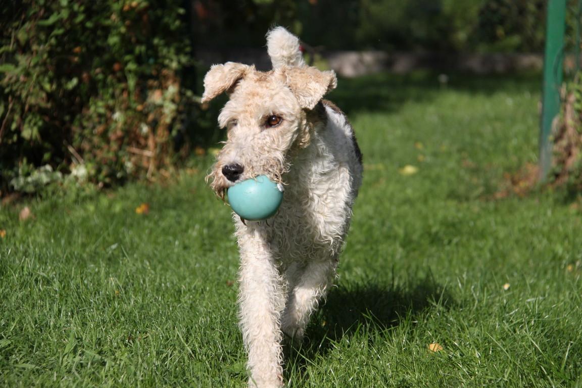 Ich hab den Ball