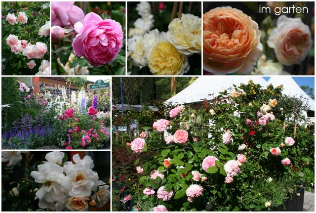 Sulzenbacher Rosen