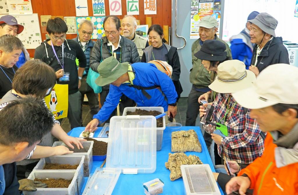 オオカブトムシの幼虫に触れてみる丸瀬布昆虫生態館