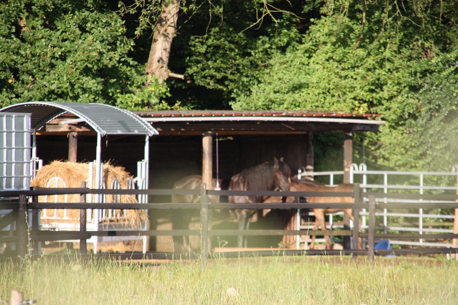 Streicheln erlaubt -Pferde gibt es viele um die beiden Ortsteile
