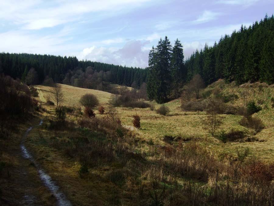 Urige Landschaft mit üppiger Flora und Fauna (Foto: V. Gossmann)