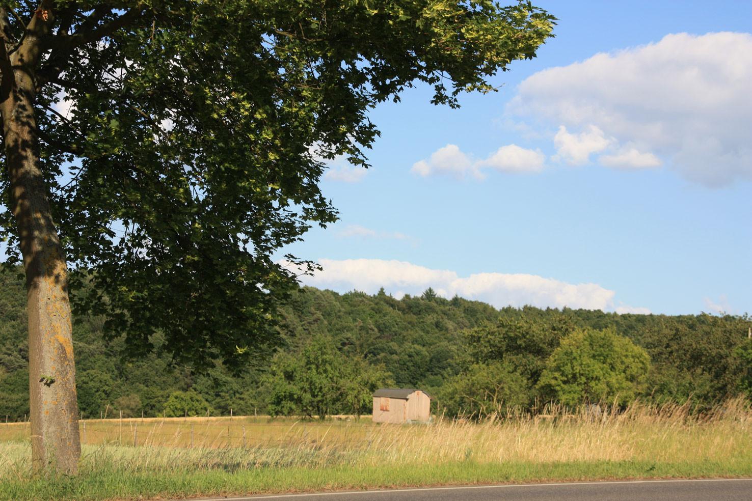 Felder und Wiesen zwischen Ückesdorf und Röttgen