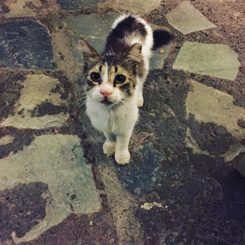 Hungrig... Sind sie alle 😻 die griechischen Miezekatzen