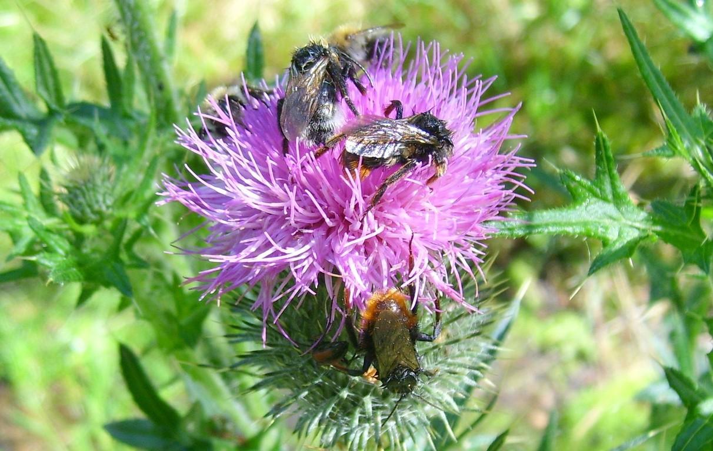 Betrunkene Bienen 7/2008 - © Betonwolke