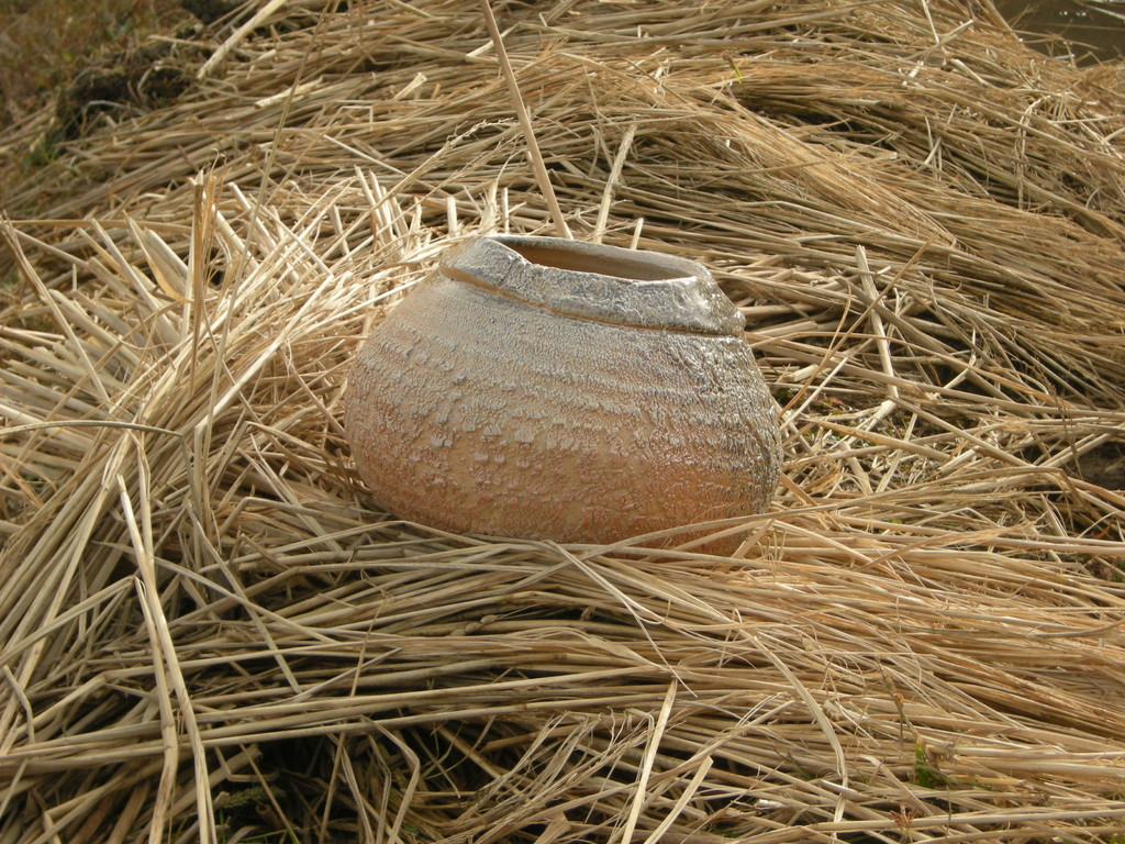 Un de mes pièces au milieu de la paille de riz