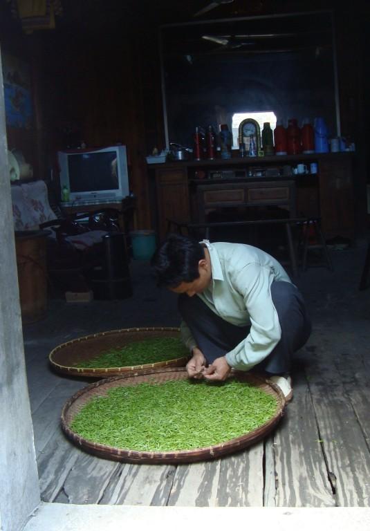 tri du thé vert à Gaolin (Chine)