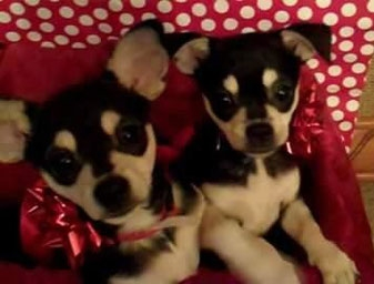 Chip & Oreo, ADOPTED!