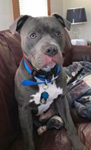 Blue, ADOPTED!