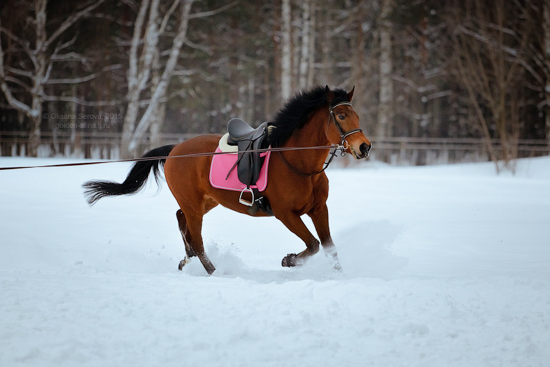 конь Эпатаж