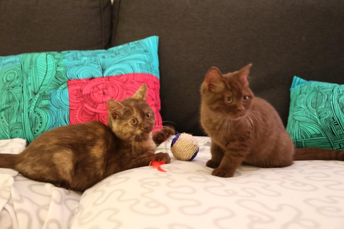 Isoline & Illaya