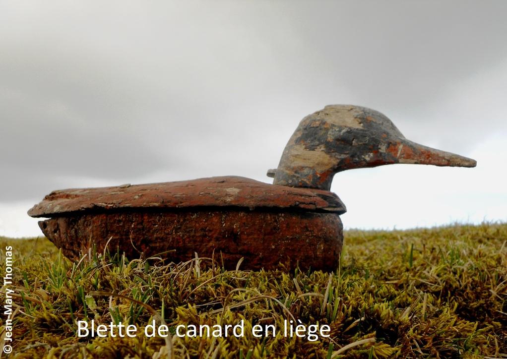 Canard                                                                                80 - Somme - Picardie