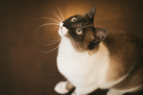 ただ今、猫ちゃんブーム。 ※画像はイメージです