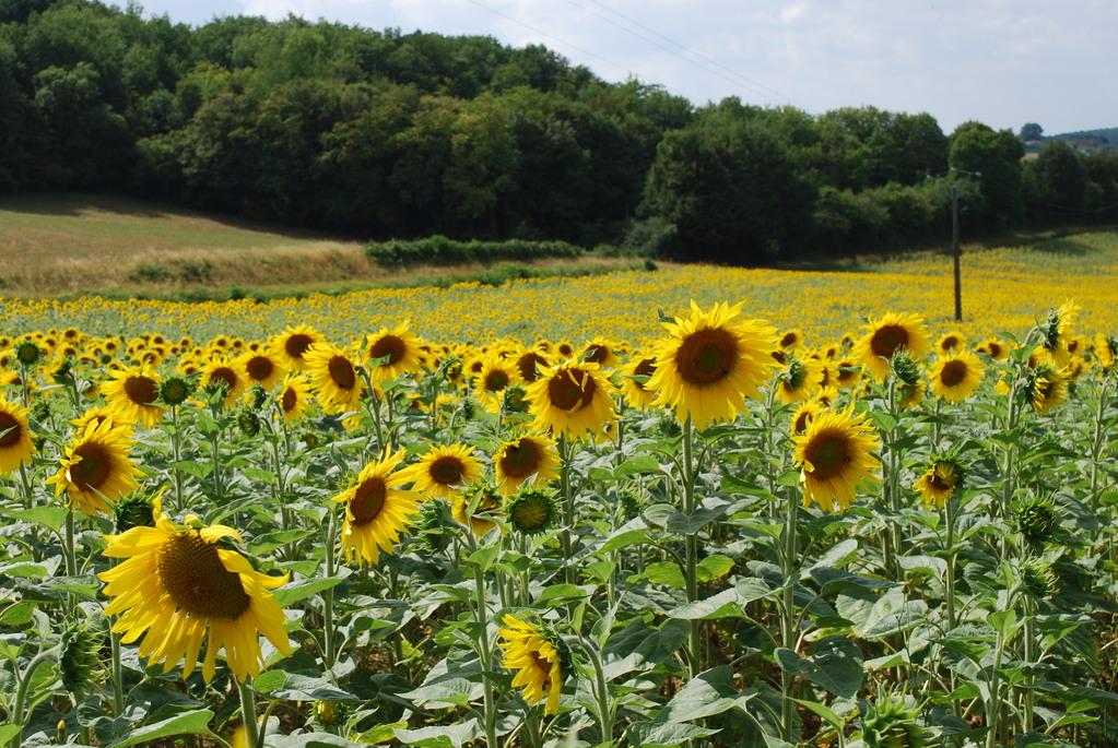 Flowery landscape