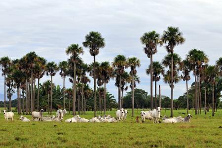 Llanos Horientales