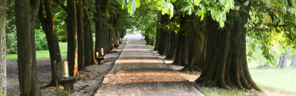 Allee im Licher Schlosspark